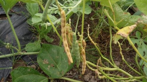 2014-8小豆