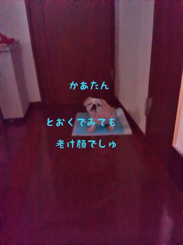 1408591208059.jpg