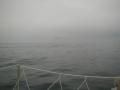 霧のトドが埼