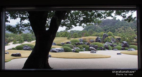 足立美術館 生の額絵 楠と枯山水庭