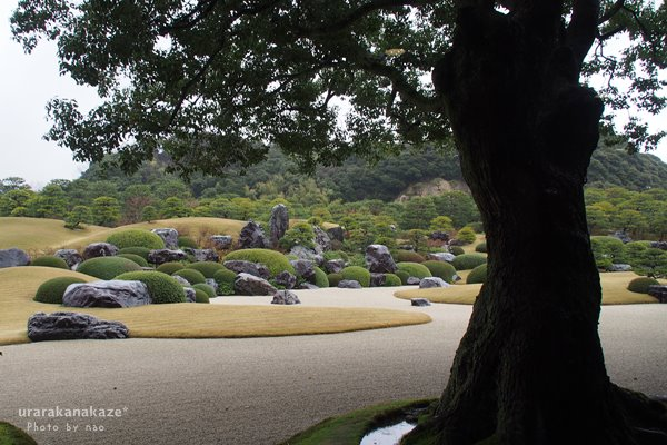 足立美術館 楠と枯山水庭