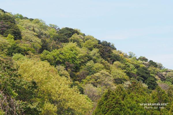 若葉色の山