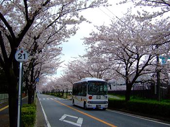saku040603.jpg