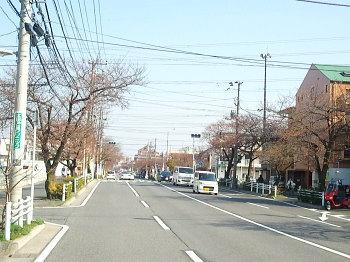 sakura032801.jpg
