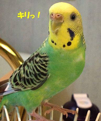 黄色ぽっぽ