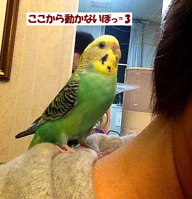 黄色ぽっぽ2