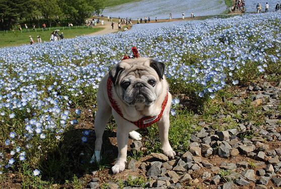 お花を踏まないところに下ろしています。
