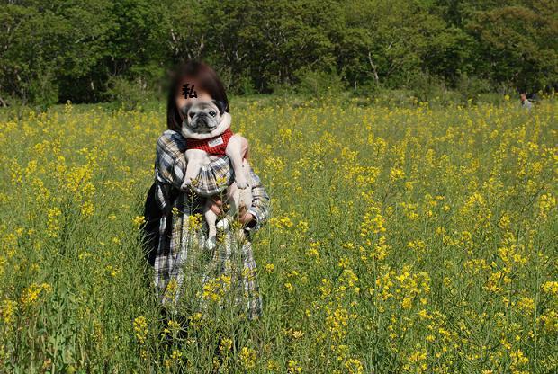 菜の花畑の愛犬とオババ