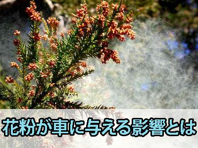 花粉が車に与える影響とは