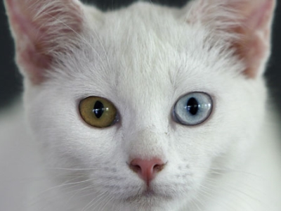 ネコの視線
