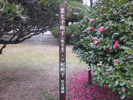 天皇記念樹