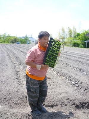 春の苗植え会4