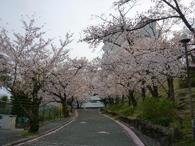 パナヒルズ桜1