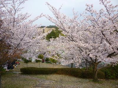パナヒルズ桜2