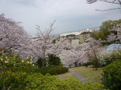 パナヒルズ桜3