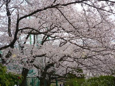 パナヒルズ桜4