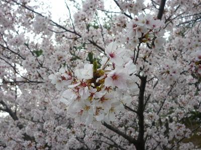 パナヒルズ桜5