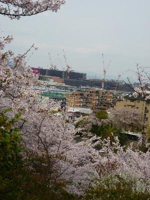 パナヒルズ桜6