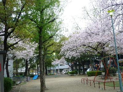 カフェ・ド・シャンパーニュ桜3
