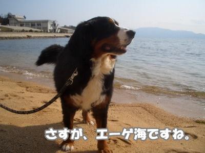 CIMG3433.jpg