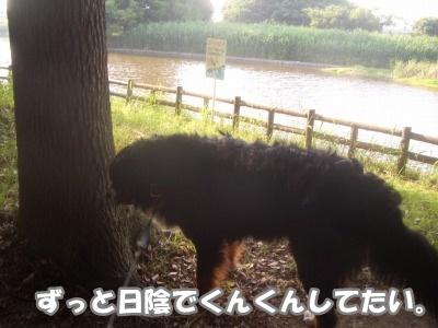 CIMG7176.jpg