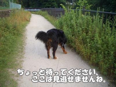 CIMG7648.jpg