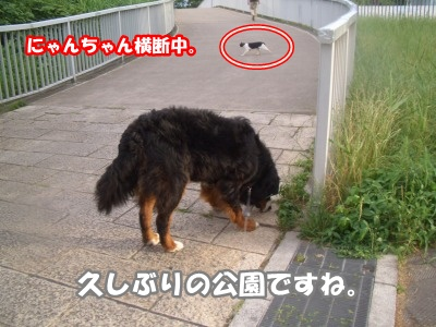 CIMG8113.jpg