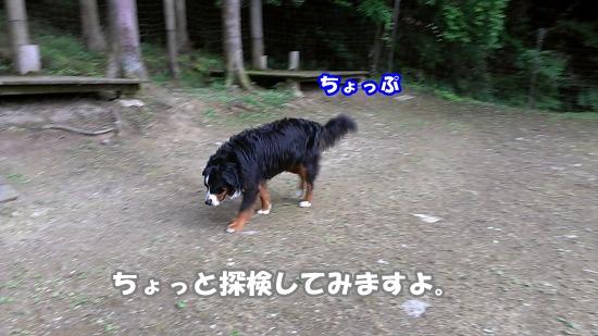 IMAG0797.jpg