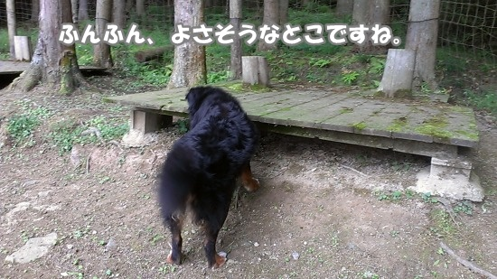 IMAG0800.jpg