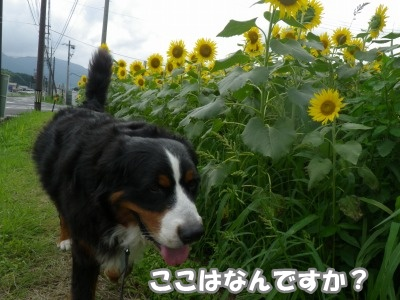 RIMG0696.jpg