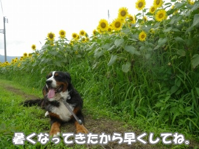 RIMG0705.jpg
