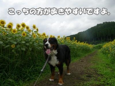 RIMG0708.jpg