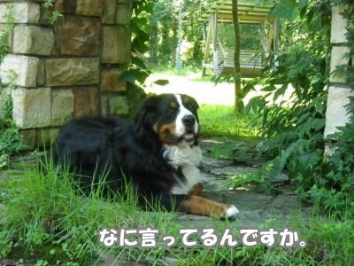 RIMG1051.jpg