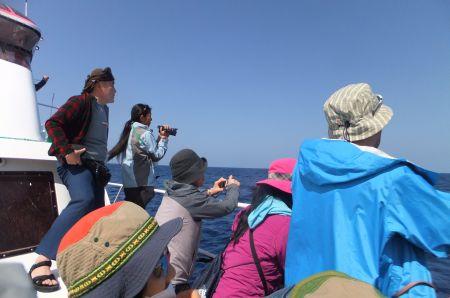 クジラを探す