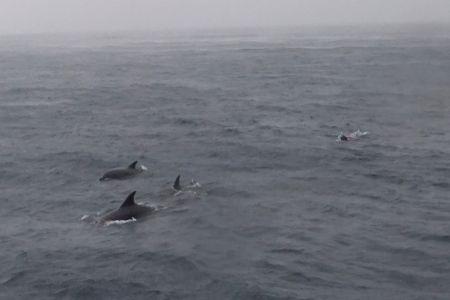 イルカと泳ぐガイド