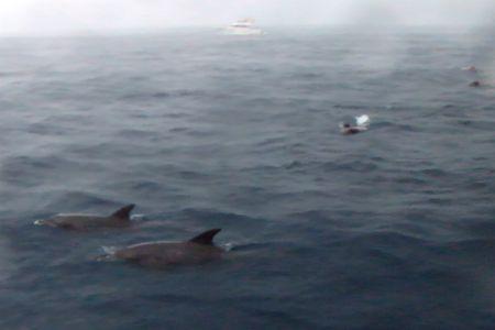 イルカと泳ぐガイドとお客