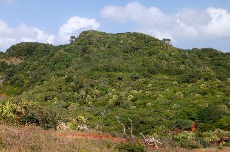 乾性低木林
