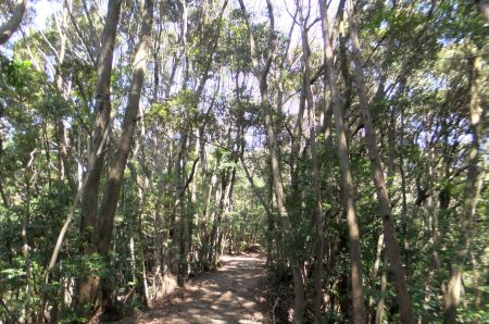 常緑広葉樹林