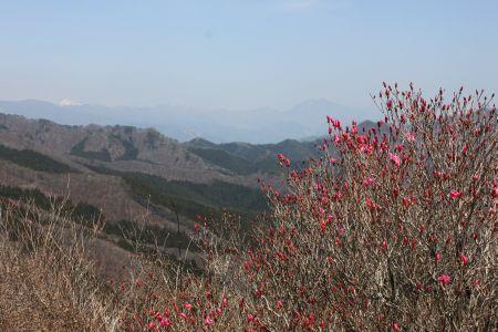アカヤシオと日光の山