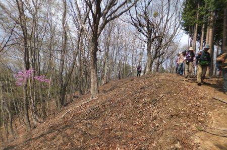 ミツバツツジ咲く下山路