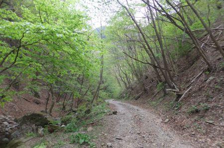 新緑の林道下り