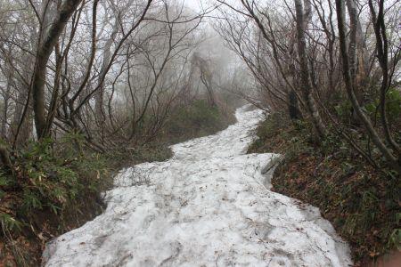 雪に覆われた登山道