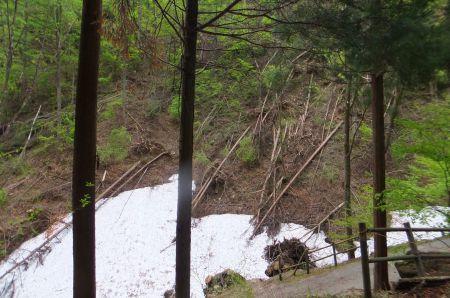 雪崩と倒木
