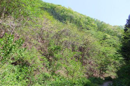 新緑の斜面