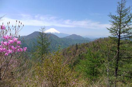 ミツバツツジと富士山