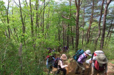 今倉山の登り