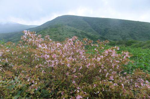 ミネザクラと湯森山