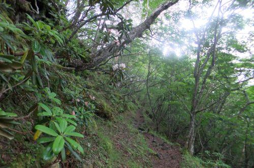 樹林帯の道