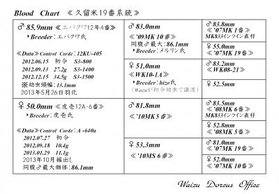 久留米19番Web用血統構成表