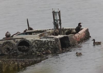 廃船上の鳥たち